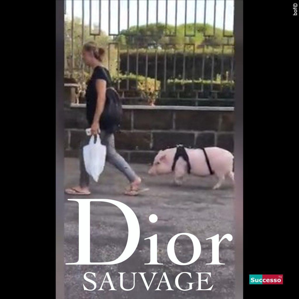 successotv satira parodia cinema dior maiale roma